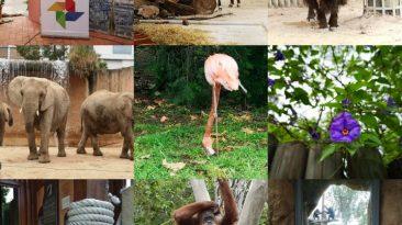 A nova Google Photos Experience mostrou no Zoo lisboeta algumas das novas ferramentas de armazenamento e edição de toda uma suíte que está cada vez mais profissional